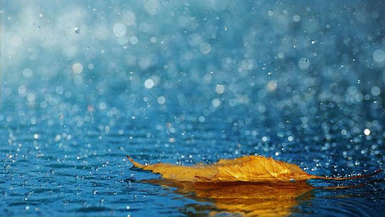 blad regen